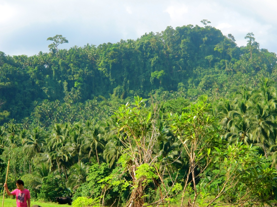 The lush green hills of Leyte